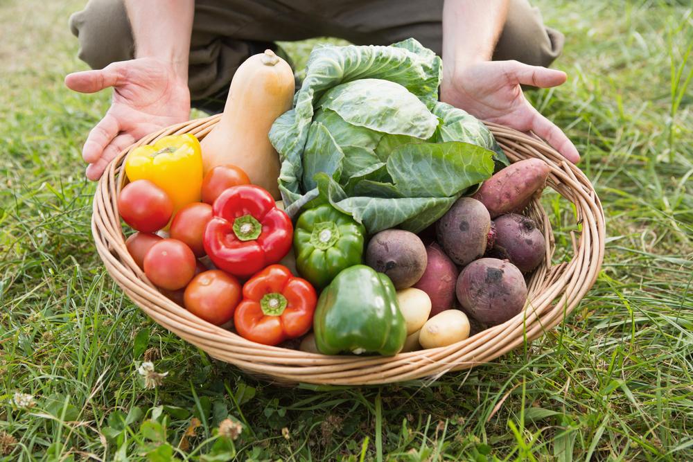 Producción agropecuaria, una actividad milenaria y rentable